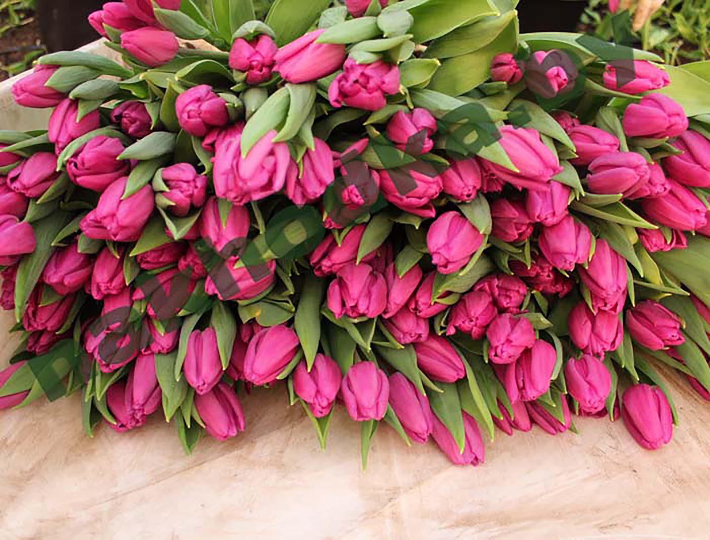 фото букетов из тюльпанов высокого разрешения замок укрепления, нанимай